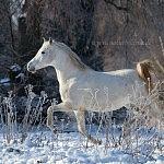 Haja – ein Wintermärchen….