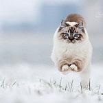 Charisma im Schnee