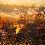 Herbst in unserer Heimat