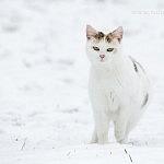 Shettys im Schnee