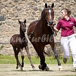 Ponys und Kleinpferde