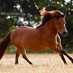 Pony Mexx