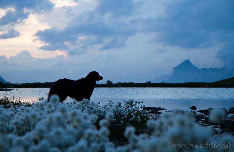 blaue Stunde auf dem Sustenpass/Schweiz