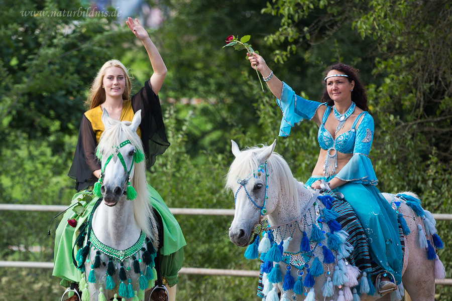 Wagner Arabians